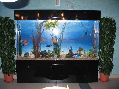 Užsakomieji-akriliniai-akvariumai