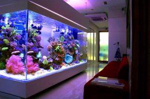 Specialus-jūrinis-akvariumas