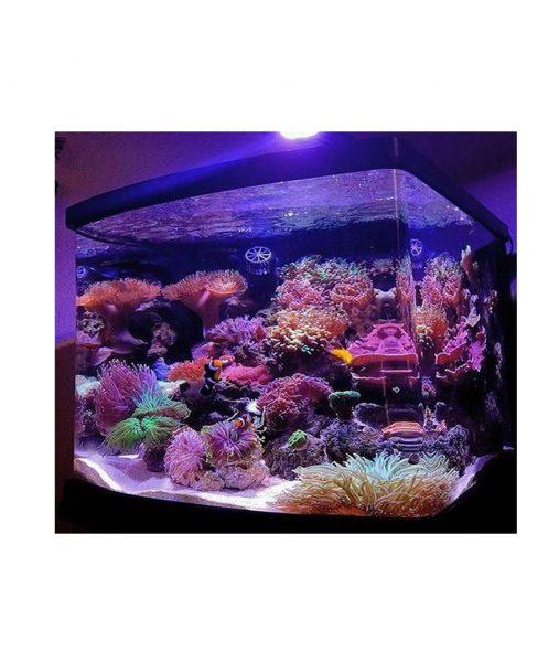 Jūrinis-akrilo-akvariumas