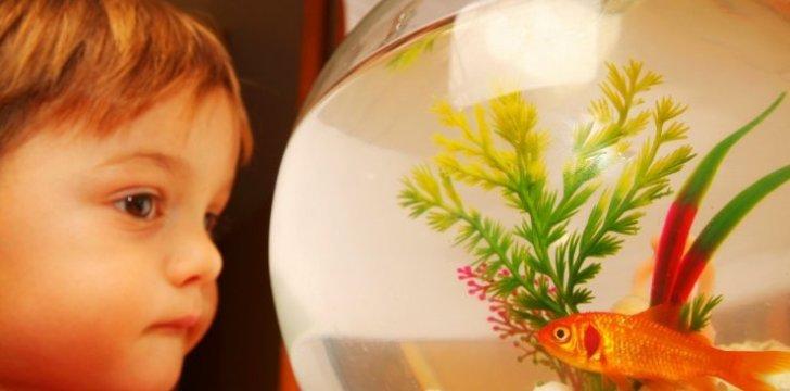 Kokį-akvariumą-rinktis-stiklo-ar-išmanųjį-akrilo